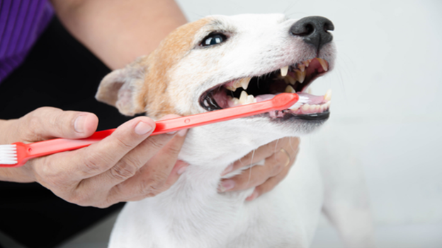 dog dental hygiene tips from helping hands veterinary clinic in lynnwood washington